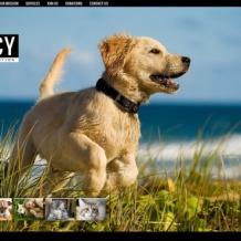 Animal Shelter Website Template