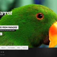 Birds Website Template