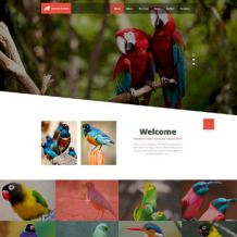 Birds Responsive Website Template